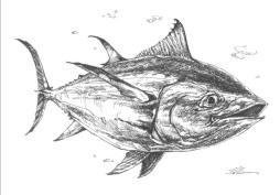 Bluefin Tuna copy