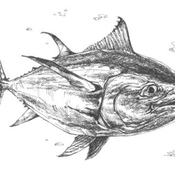 Bluefin Tuna copy